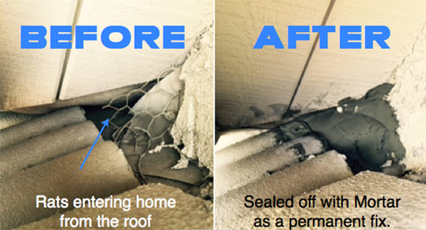 True Heat Solutions - Rodent-Proofing
